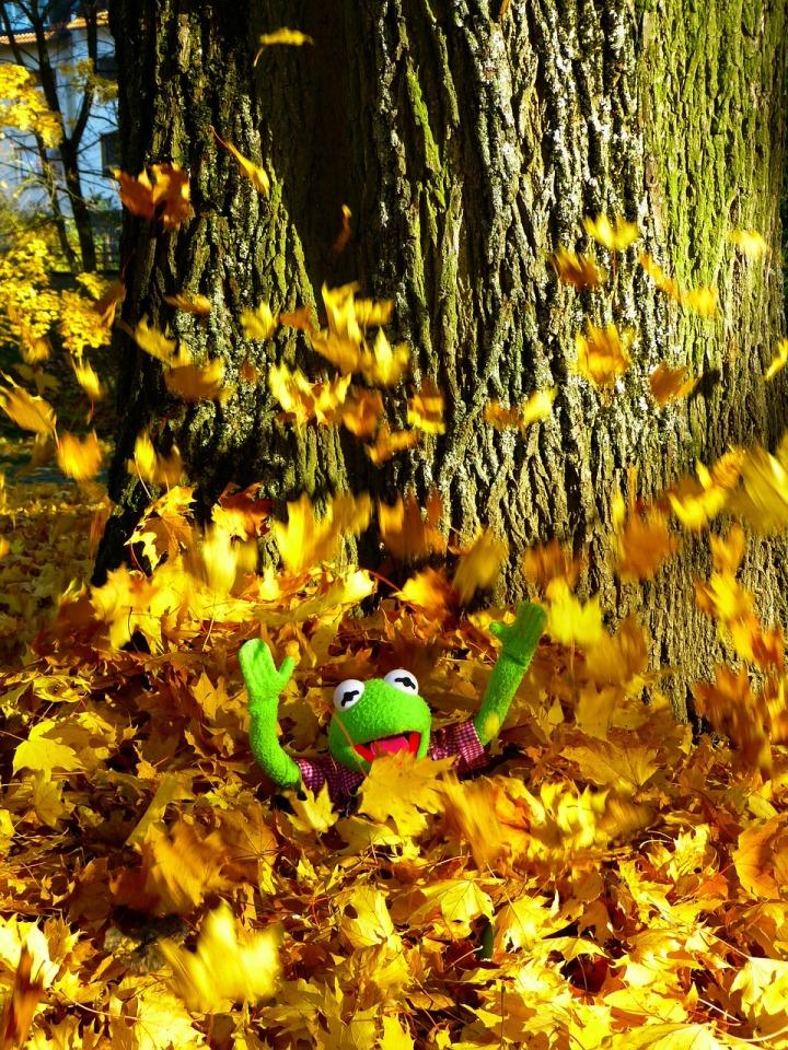 leaves-63303_1280