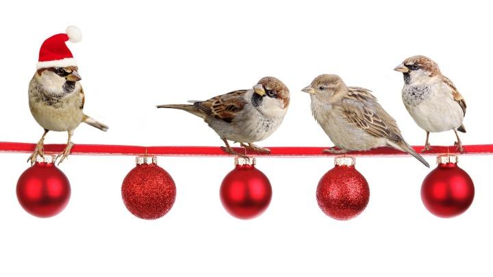 sparrows-2900850_1280.jpg